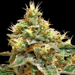 Confidential Cheese