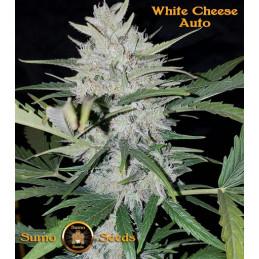 White Cheese Auto