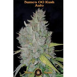 Sumo's Og Kush Auto