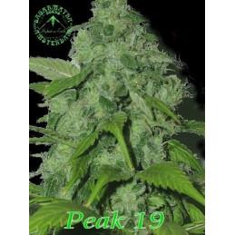 Peak 19