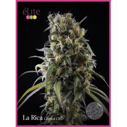 La Rica - Clasica CBD
