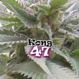 Kong 47