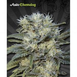 Auto Chemdog