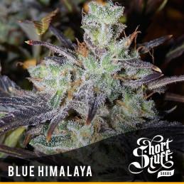 Blue Himalaya