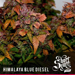 Himalaya Blue Diesel