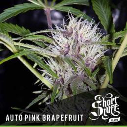 Auto Pink Grapefruit