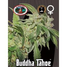 Buddha Tahoe