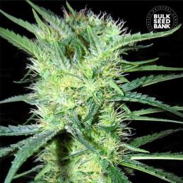K2 - Bulk Seed Bank
