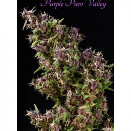 Purple Paro Valley