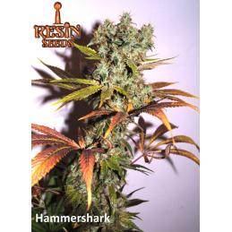 Hammershark