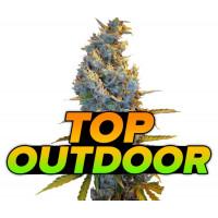 Topowe odmiany marihuany na outdoor