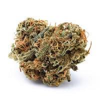 Plon XXL czyli odmiany marihuany z największym plonem