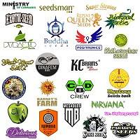 Producenci nasion konopi marihuany