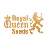 Royal Queen Seeds nasiona konopi, nasiona marihuany