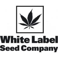 White Label nasiona marihuany, konopi