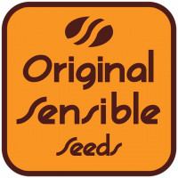 Orginal Sensible Seeds nasiona konopi, marihuany