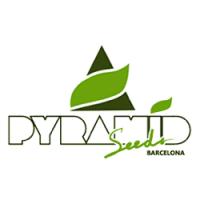 Pyramid Seeds nasiona konopi, marihuany tylko feminizowane