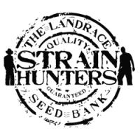 Strain Hunters feminizowane nasiona marihuany, konopi