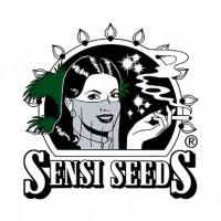 Sensi Seeds | nasiona marihuany | konopi | NasionaMarychy.pl