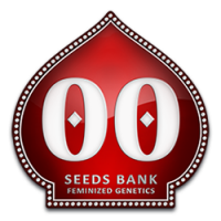 00 Seeds Bank  feminizowane nasiona marihuany