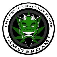 Devil's Harvest nasiona konopi, marihuany