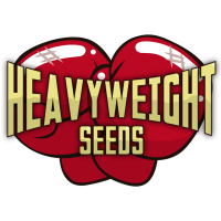 Heavyweight Seeds - nasiona marihuany, konopi, feminizowane, indoor, outdoor, automaty